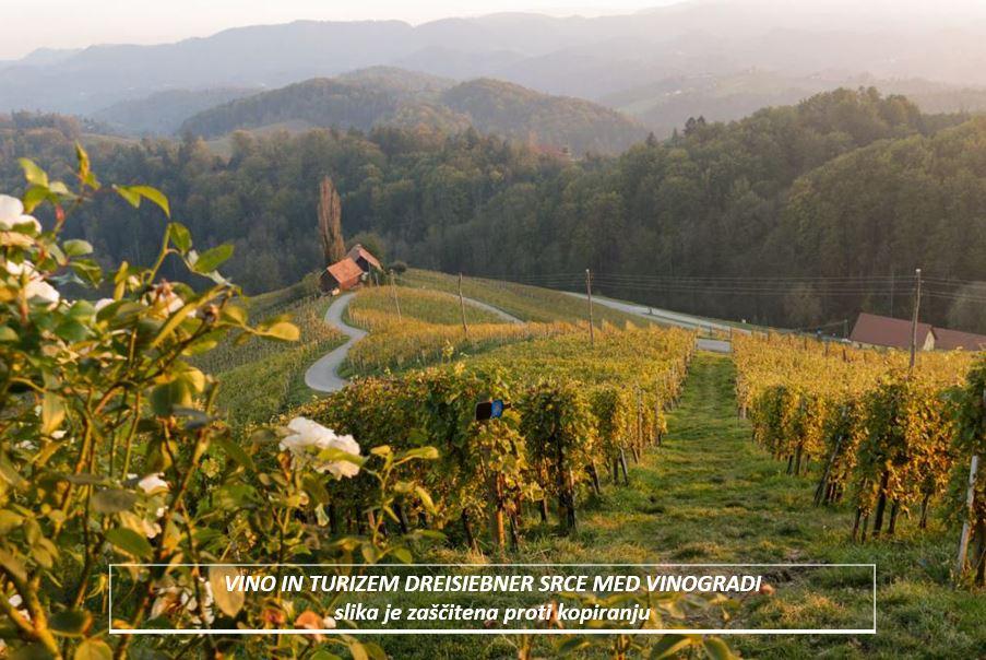 dreisiebner  vino in turizem srce med vinogradi9